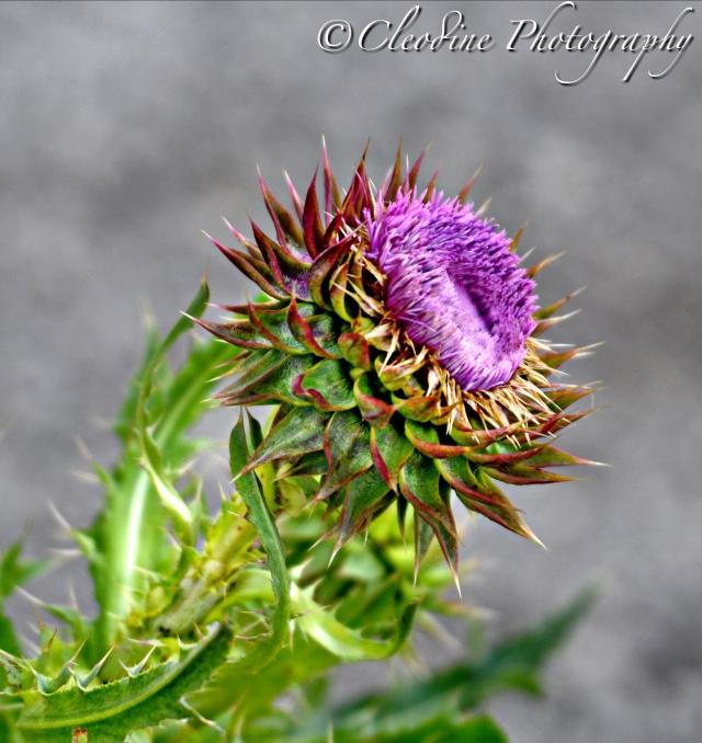 Weed Flower