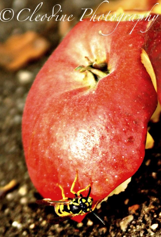 Applebee ;)